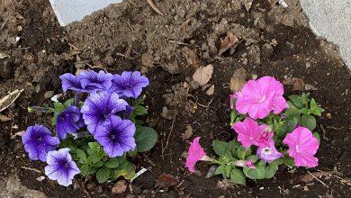 お庭にお花を植えてみました。